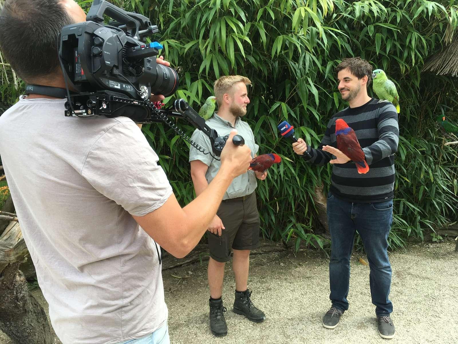 Die WDR Lokalzeit OWL und die Lippische Landeszeitung waren zu Gast im Vogelpark - Vogelpark Mitarbeiter Marc-Philip Eckstein im Gespräch mit Heimaturlauber Christian Saftig vom WDR - Heimaturlaub in OWL und der Alltag eines Tierpflegers waren Thema im Familienpark zum Anfassen