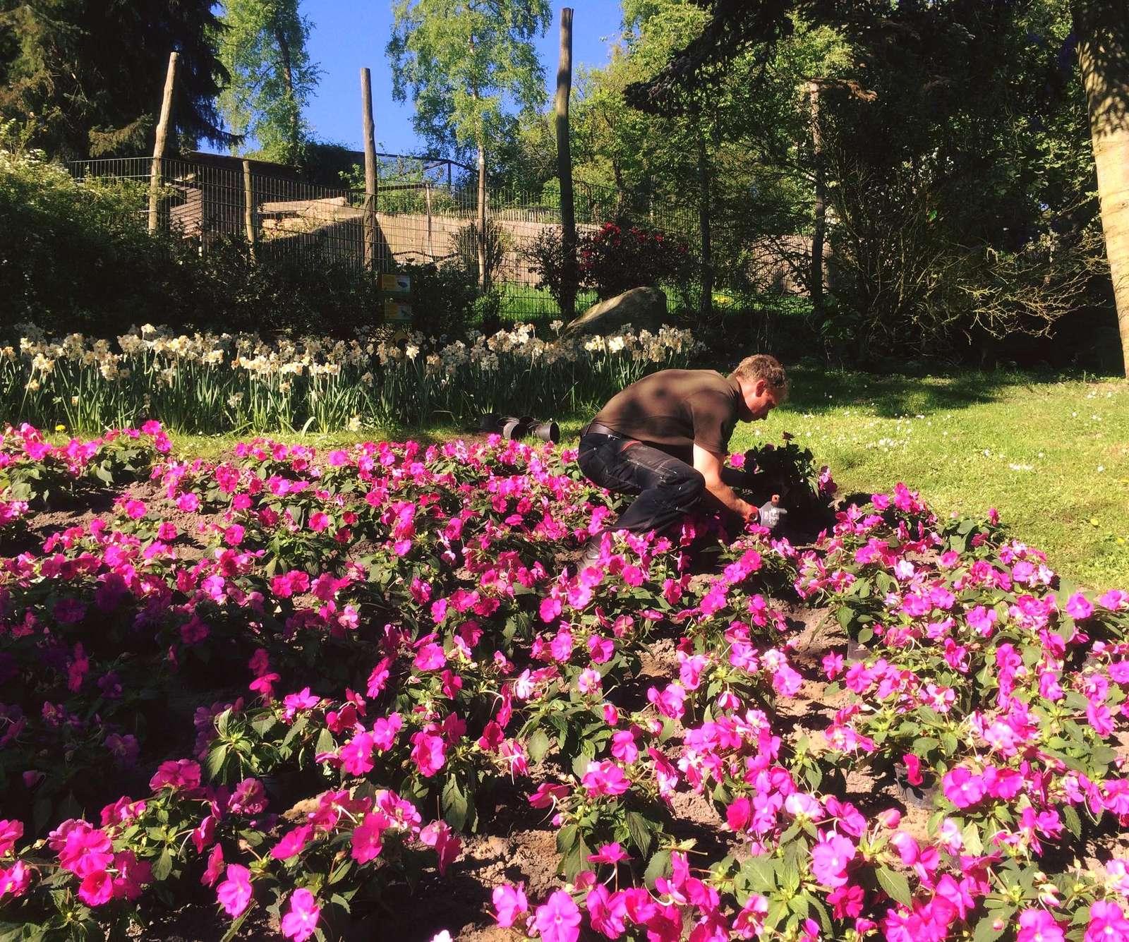Blumen-Kampagne - Die Zweite - Nach den Narzissen ist vor den Sommerblumen!