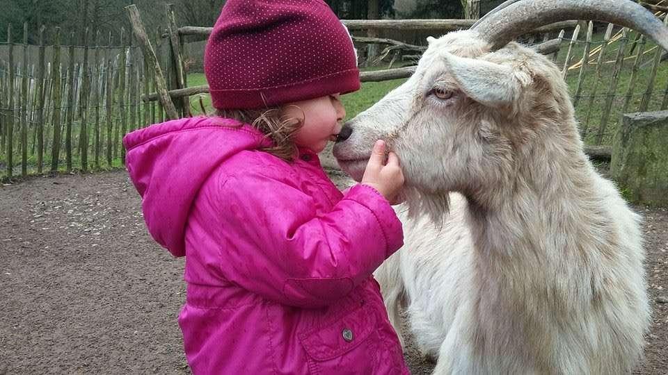 """Der Vogelpark Heiligenkirchen wünscht allen frohe Ostern! - Foto: Vogelpark Heiligenkirchen - Sophie weiß bei wem sie sich unter anderem bedanken muss – """"Heidi"""" ist eine der stolzen Mütter unserer insgesamt sieben Ziegenjungen!"""