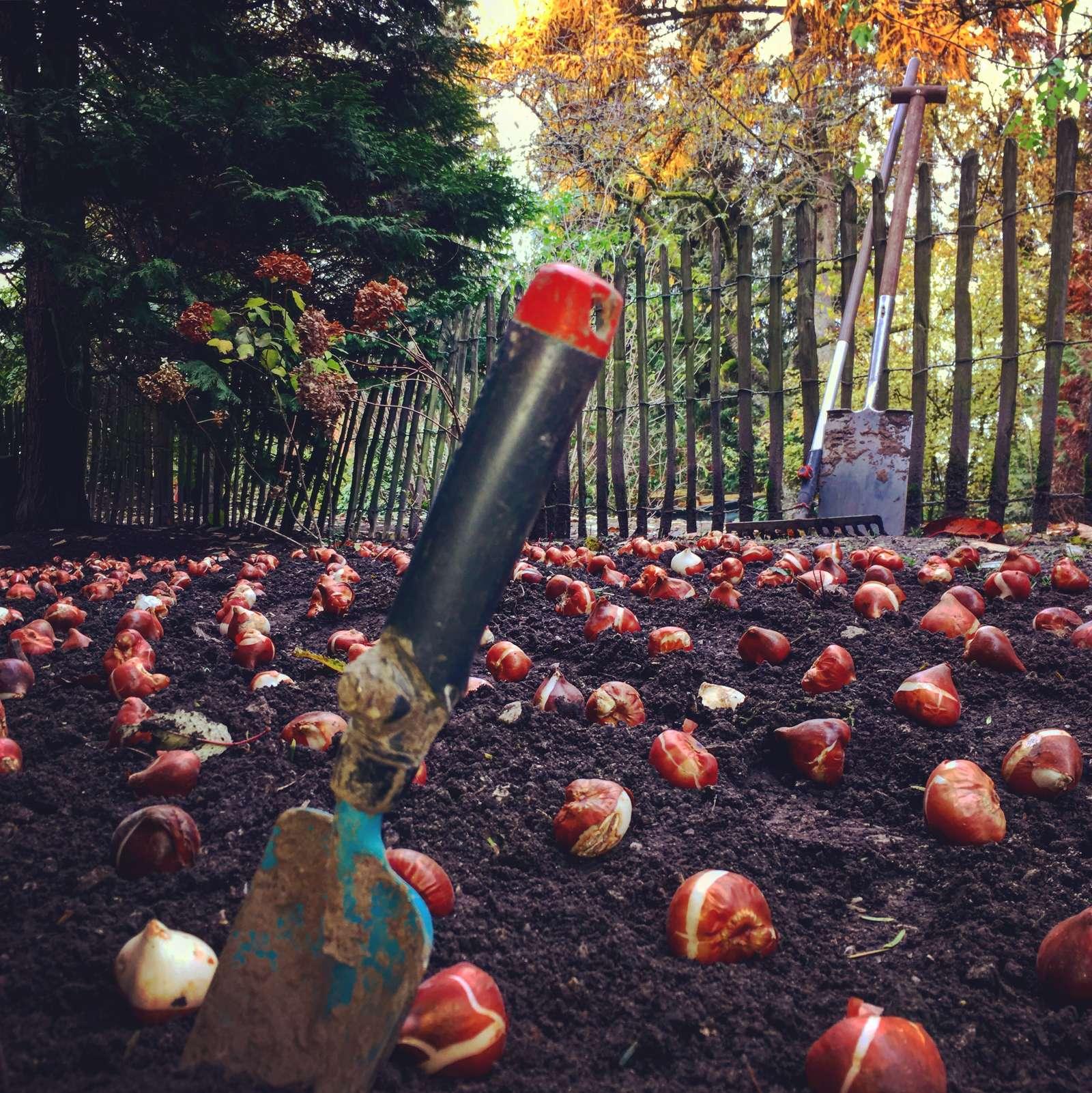 Wir pflanzen den Frühling! - In Reih und Glied - Die letzten der 20.000 Tulpen und Narzissen finden den Weg zum Überwintern in die Erde