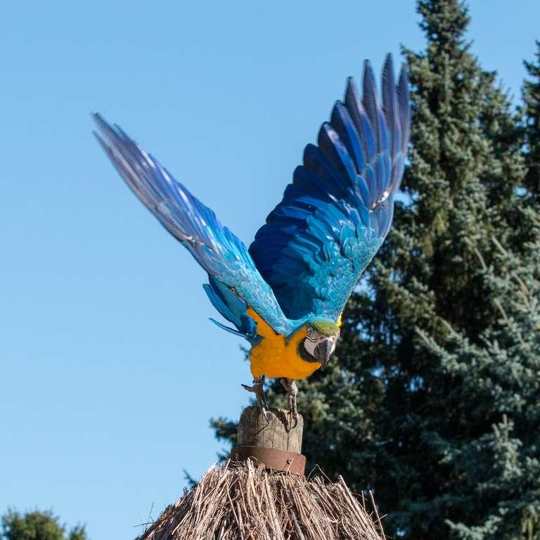 Wir starten am 18. März in die Saison 2017! - Foto: H. Meierjohann - Der Vogelpark Heiligenkirchen öffnet für Sie seine Tore am 18. März und heißt Sie herzlich willkommen! Lesen Sie was Neues auf Sie wartet…