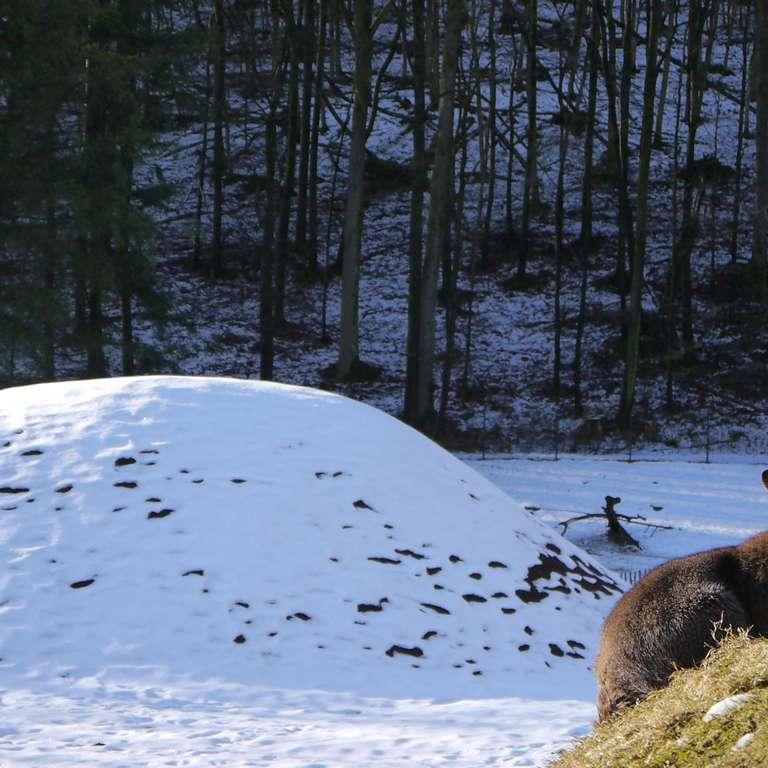 +++ UPDATE  +++  - Für das Känguru sind die Temperaturen kein Problem Schnee so weit das Auge reicht Hier ist noch nicht an spielen zu denken Der Schnee hat die Narzissen vorm Frost geschützt Auf den Parkplätzen liegt eine dicke Schneeschicht - Witterungsbedingt müssen wir leider den Saisonstart auf den 17. März verschieben!