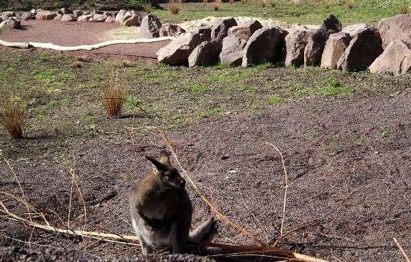 4000 m² Australien im Vogelpark - Australien im Vogelpark Heiligenkirchen - Stück für Stück nimmt unser neues Gelände Formen an: Roter Sand (aus Rhyolith) läßt schon erahnen, welcher Kontinent hier Thema ist.