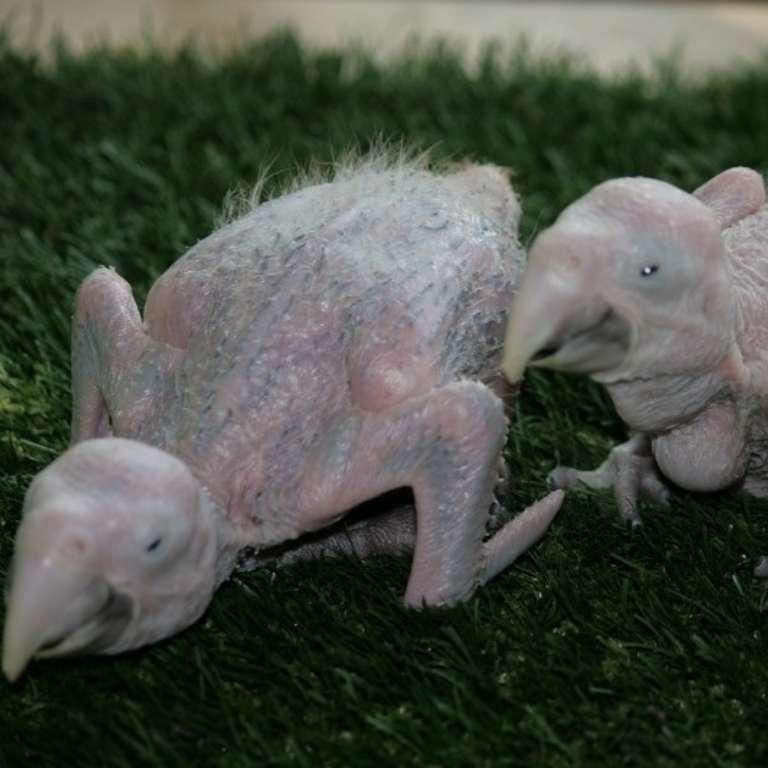 August 2013 - Weiterer Nachwuchs im Vogelpark!