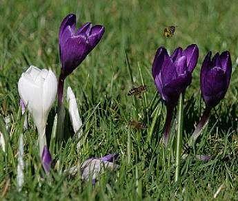 Saisonstart 2012 - Krokus im Frühling Benett-Kängurus - Nachdem nun die ersten Frühlingsboten im Park erscheinen und wir während des Winters für viel Neues und Interessantes gesorgt haben, starten wir am 17. März in die neue Saison.
