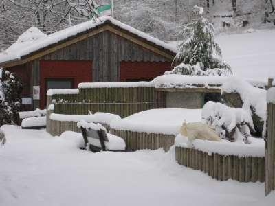 Winter im Vogelpark Heiligenkirchen - Wir beginnen die Saison 2010 am 20 März.