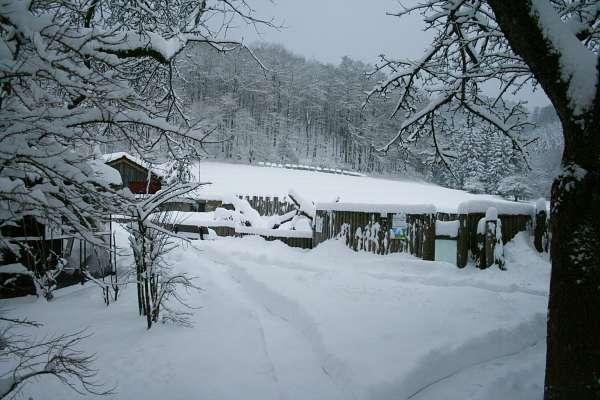 Winter im Vogelpark Heiligenkirchen - Winterruhe im Vogelpark zugeschneite Wege im Vogelpark Mandschurenkraniche im Schnee weißer Nandu im Schnee Präriehundgehege im Schnee Präriehunde in der Winterruhe - Mandschurenkraniche & Nandu im Schnee